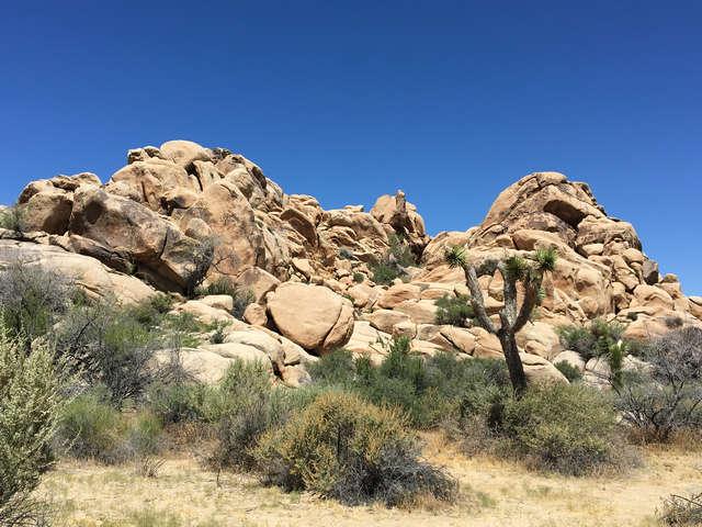 Joshua Tree Rock Formation