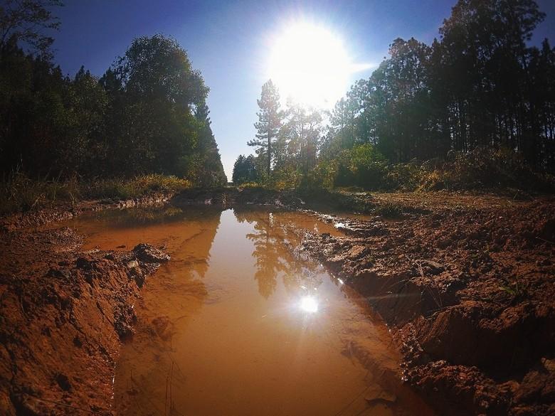 Beerwah State Forest Australia