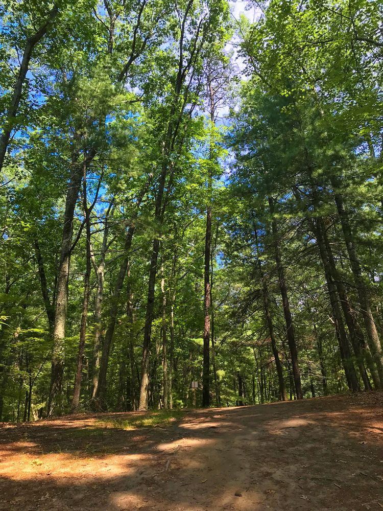 Thoreau's Walden Woods