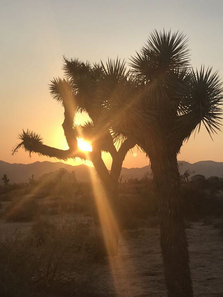 Sunset at Joshua Tree WhereGalsWander Top 10 National Parks